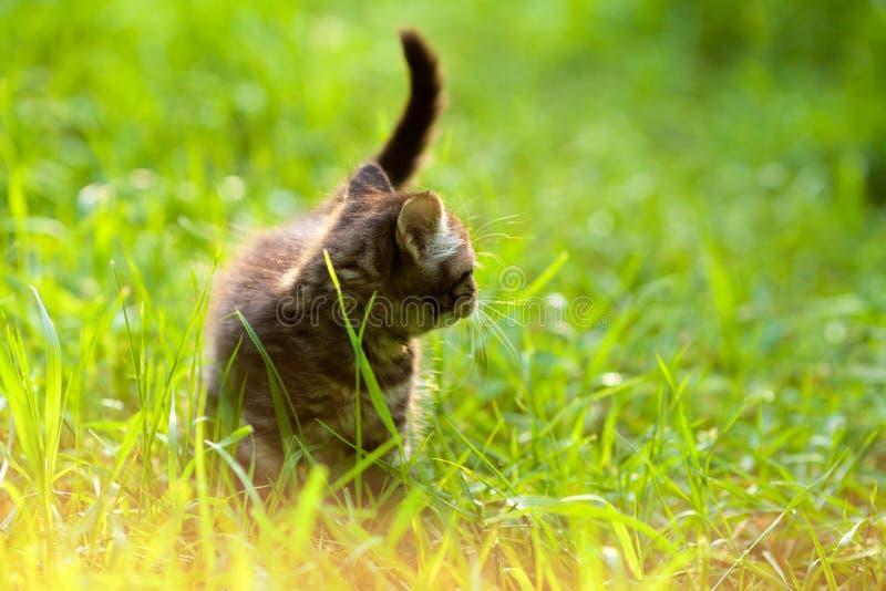 Gatito que camina en la hierba imagen de archivo