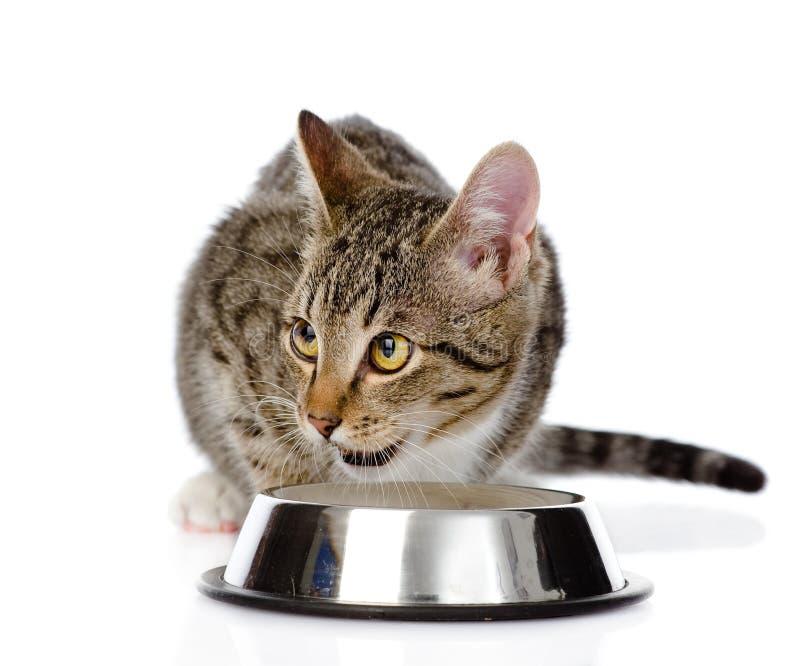 Gatito que come la comida para gatos Aislado en el fondo blanco imágenes de archivo libres de regalías