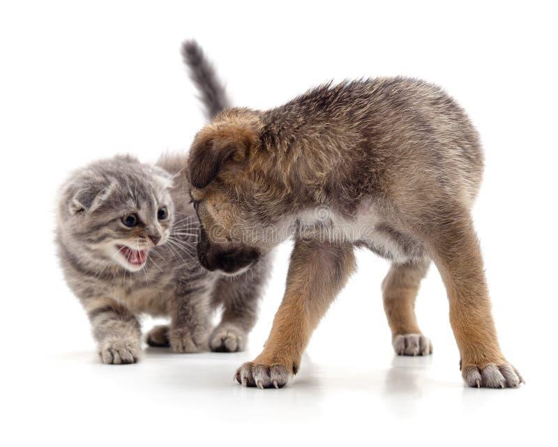 Gatito que grita a cachorro imágenes de archivo libres de regalías