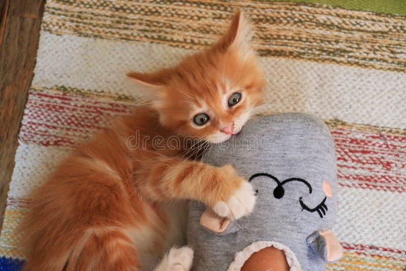 Gatito que juega con el pie fotografía de archivo