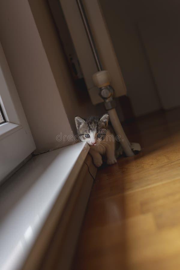 Gatito que juega por la ventana fotografía de archivo libre de regalías
