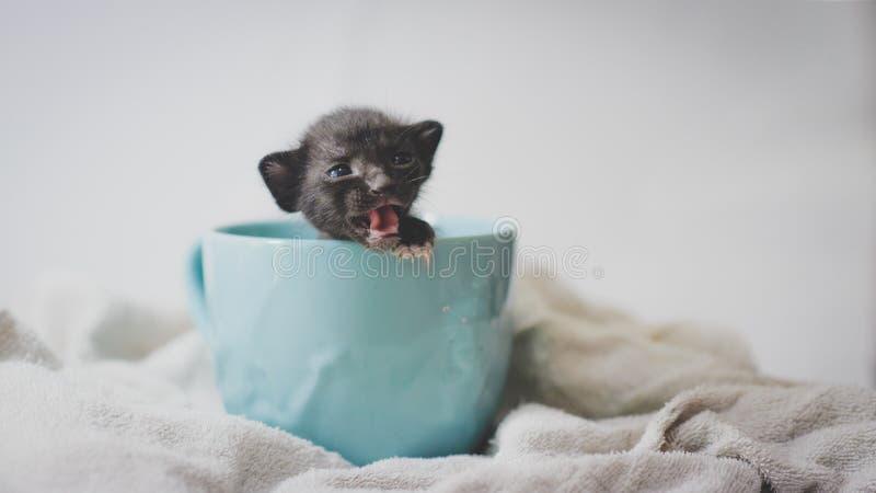 Gatito que le llama imagenes de archivo
