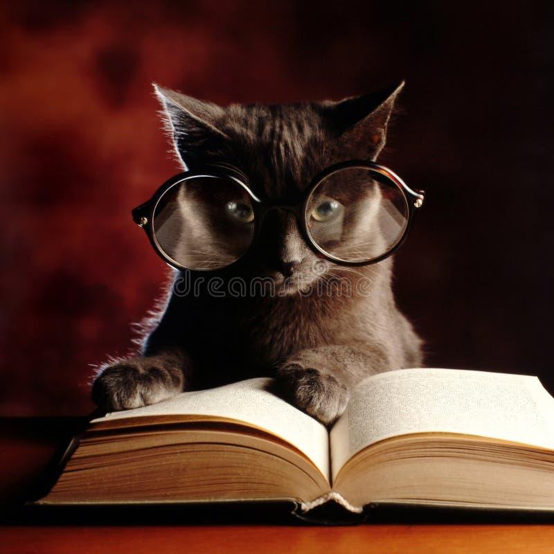 Gatito que lee un libro fotos de archivo