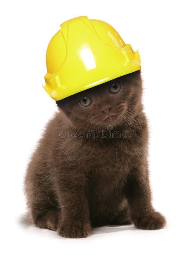 Gatito que lleva un casco amarillo de los constructores imagenes de archivo
