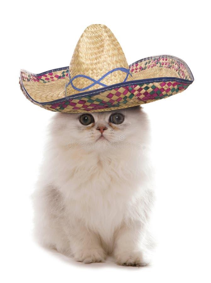 Gatito que lleva un sombrero imagen de archivo