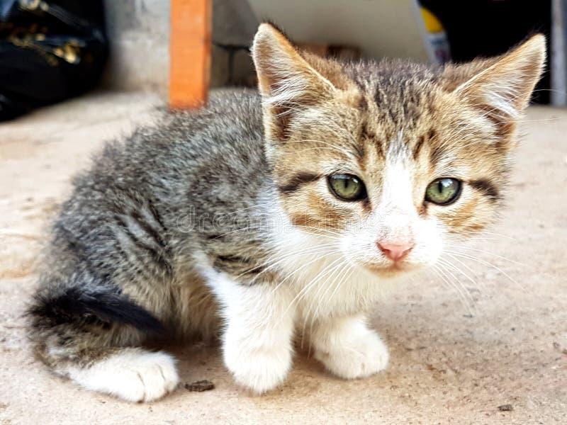 Gatito que me mira foto de archivo libre de regalías