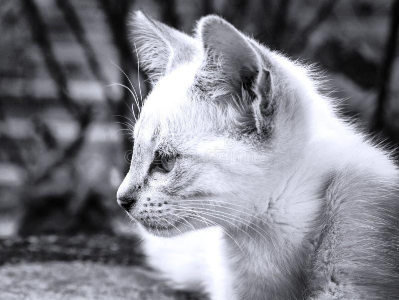Gatito que mira algo fotografía de archivo libre de regalías