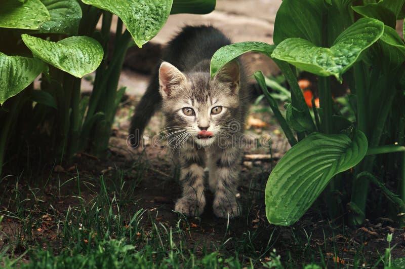 Gatito que oculta en los arbustos imágenes de archivo libres de regalías