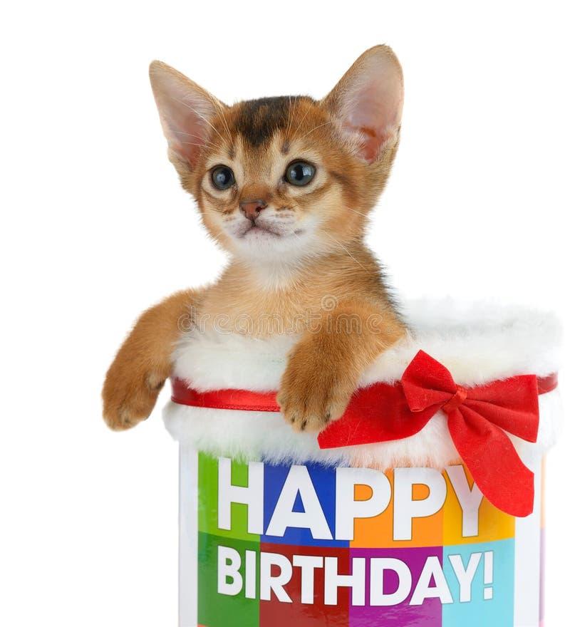Gatito que se sienta en un cubo del feliz cumpleaños fotos de archivo