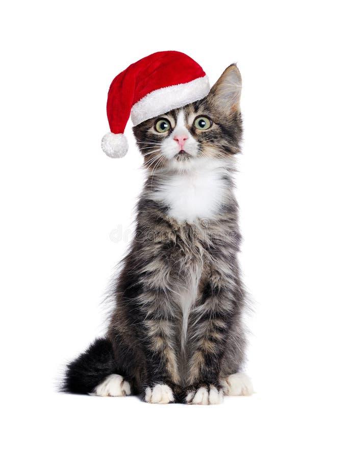 Gatito que se sienta que lleva el sombrero de santa imagen de archivo