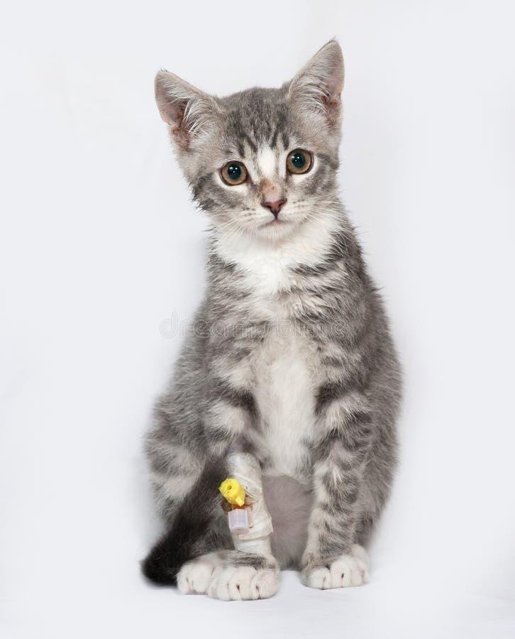 Gatito rayado enfermo y blanco que se sienta en gris imagen de archivo