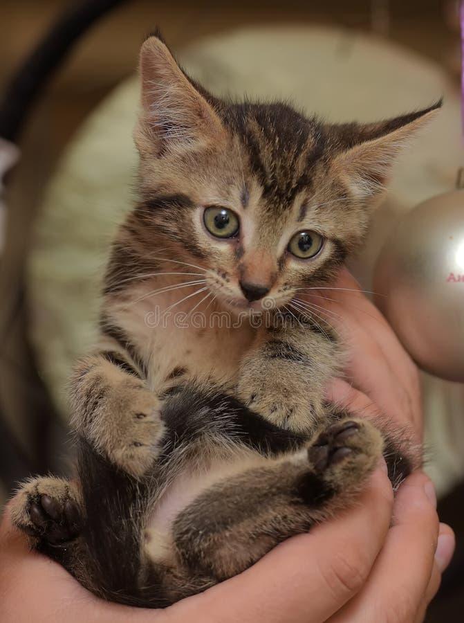Gatito rayado lindo foto de archivo libre de regalías