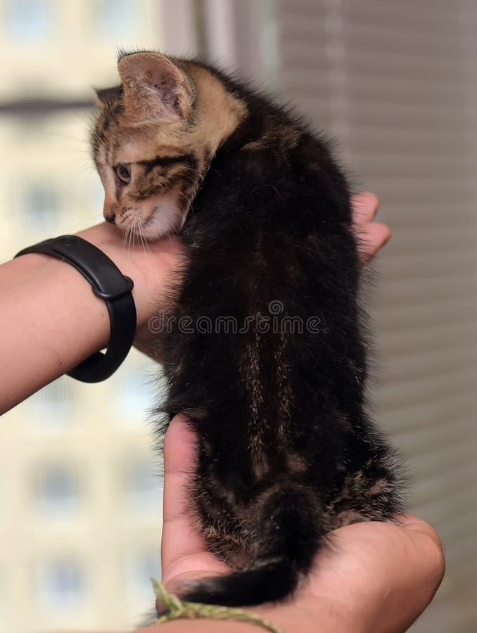 Gatito rayado lindo fotografía de archivo libre de regalías