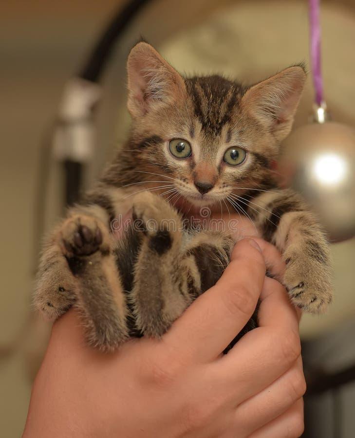 Gatito rayado lindo imagen de archivo