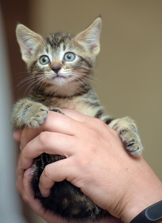 Gatito rayado lindo foto de archivo
