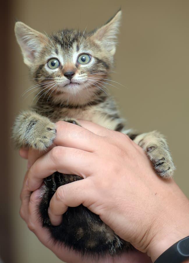 Gatito rayado lindo imagen de archivo libre de regalías