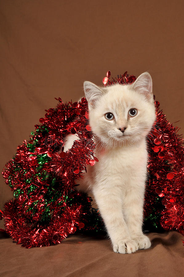 Gatito realmente lindo 3 de la Navidad fotografía de archivo