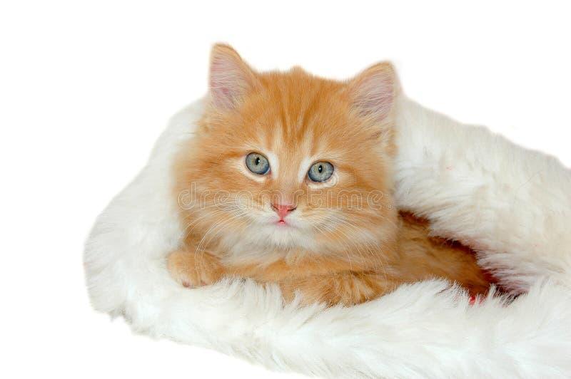 Gatito rojo 2 de la Navidad imagen de archivo