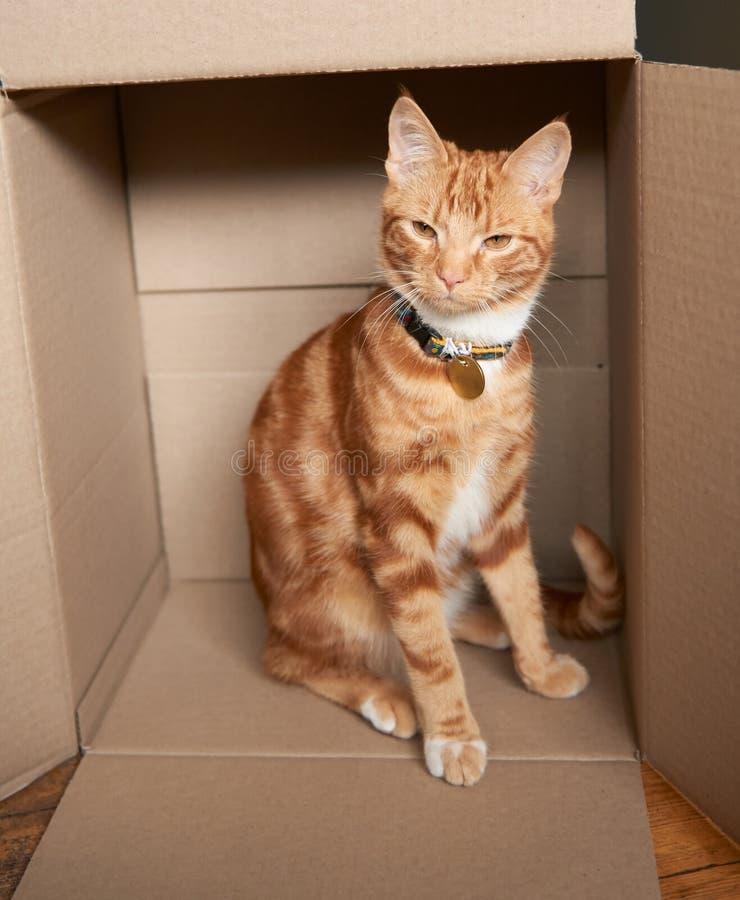 Gatito rojo del gato atigrado del jengibre adorable que se sienta dentro de una caja de cartón imagen de archivo