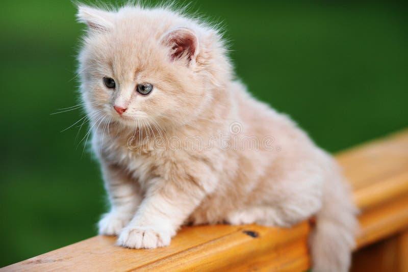 Gatito rojo en el banco fotografía de archivo libre de regalías