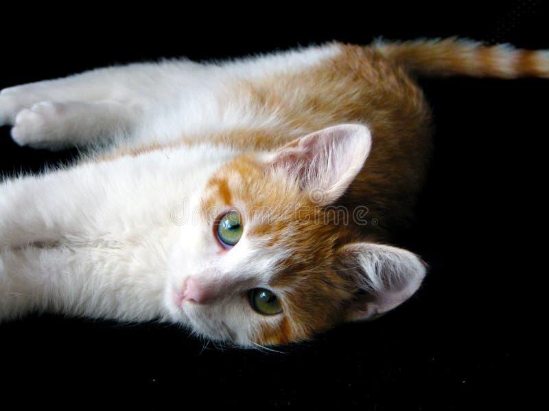Gatito rojo lindo fotografía de archivo