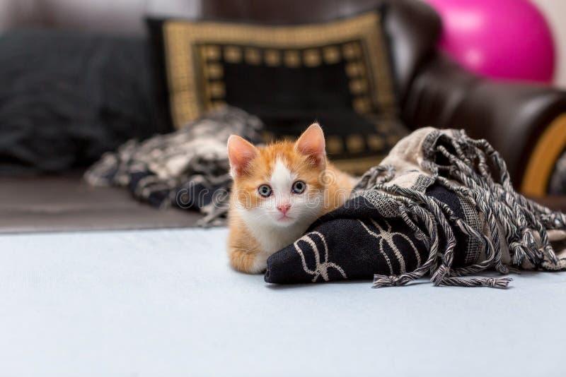 Gatito rojo lindo que se sienta en la cama cerca de la tela escocesa Espacio para el texto fotos de archivo