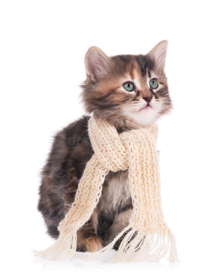Gatito siberiano enfermo imagenes de archivo