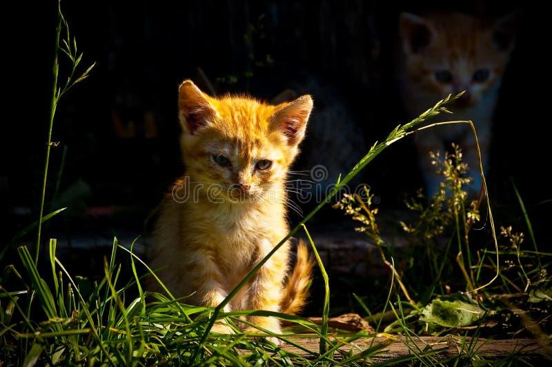 Gatito sin hogar fotografía de archivo libre de regalías