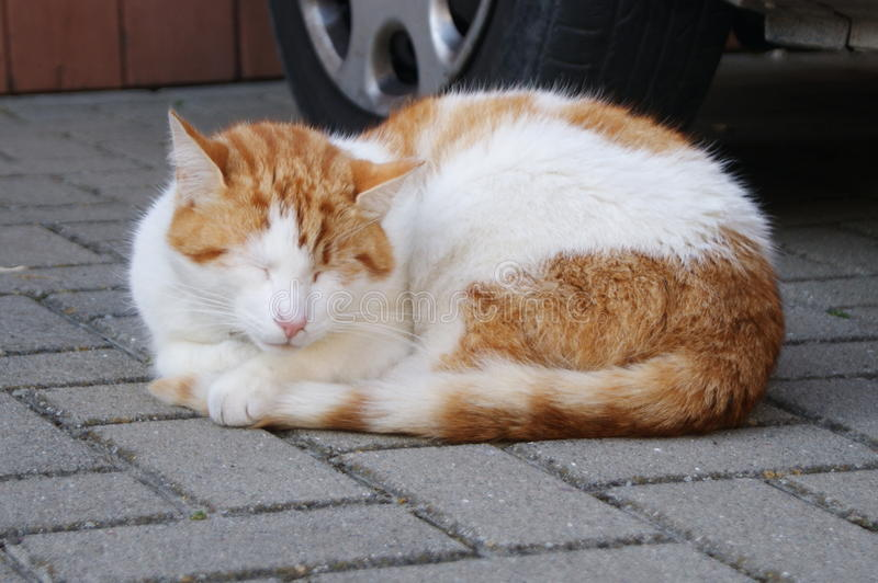 Gatito soñoliento en la acera imagenes de archivo