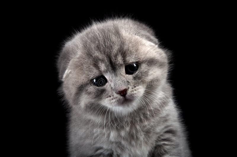 Gatito solo triste imagen de archivo libre de regalías