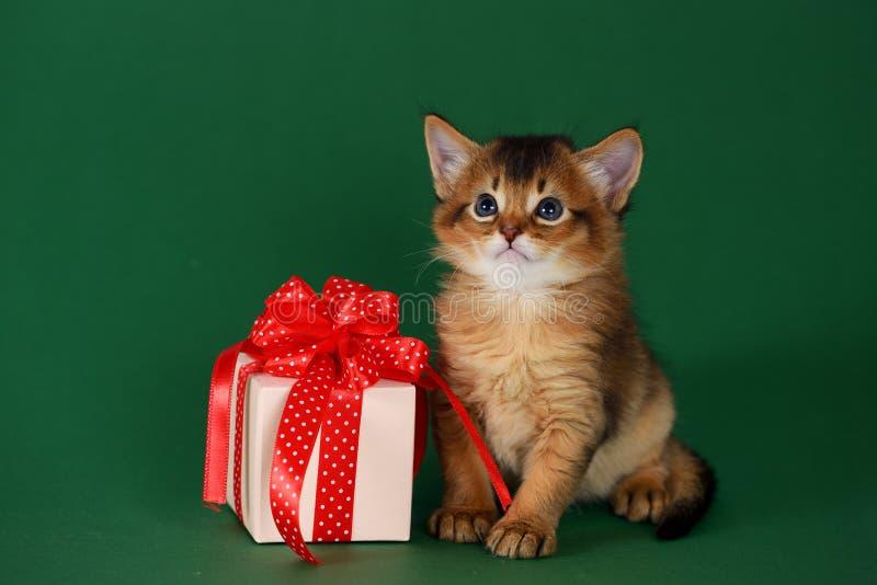 Gatito somalí lindo que se sienta cerca de una actual caja fotografía de archivo