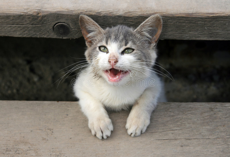 Gatito sonriente foto de archivo libre de regalías