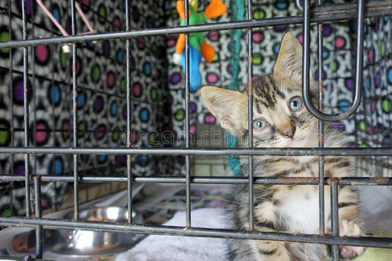 Gatito triste en una jaula en el refugio para animales que espera a un nuevo propietario imagen de archivo