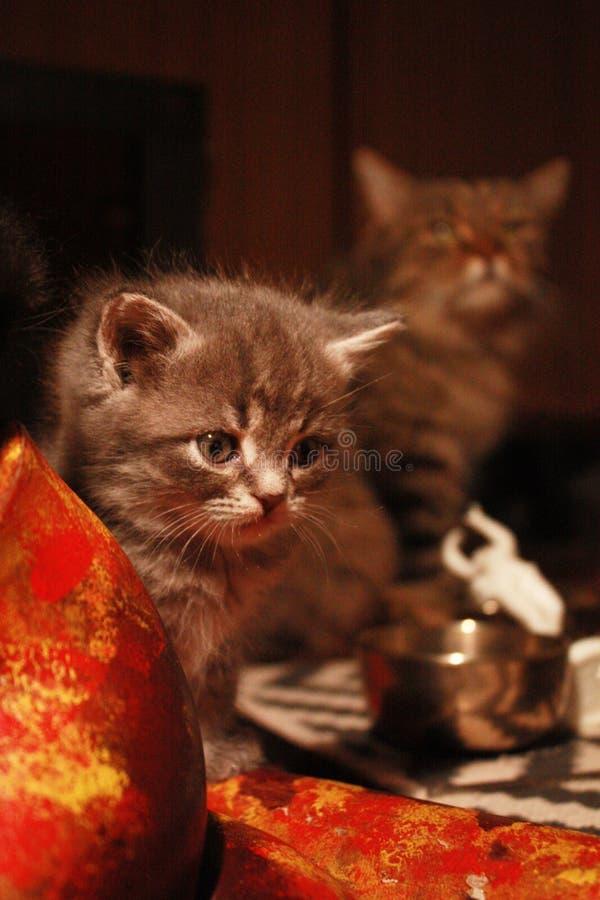 gatito y cuenco del canto fotografía de archivo