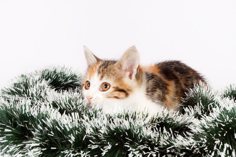 Gatito y malla manchados la Navidad fotografía de archivo libre de regalías