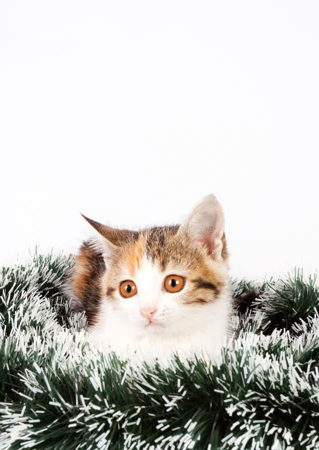 Gatito y malla manchados la Navidad imagen de archivo