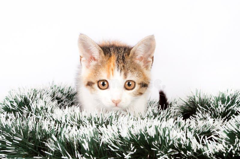 Gatito y malla manchados la Navidad foto de archivo