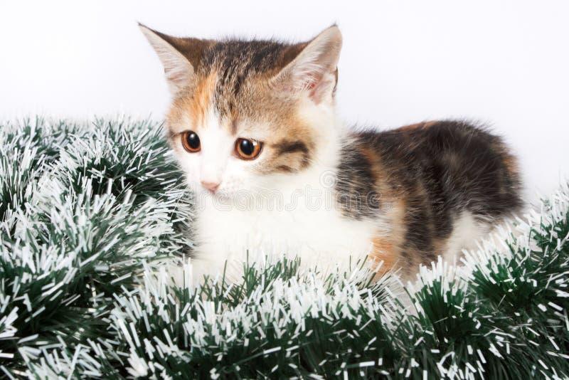 Gatito y malla manchados la Navidad fotos de archivo