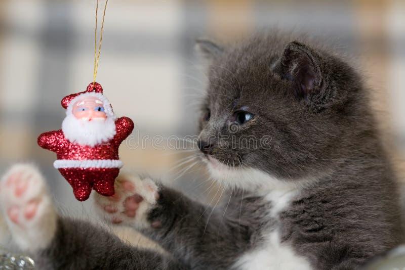 Gatito y Papá Noel grises foto de archivo