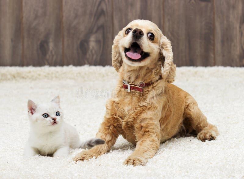Gatito y perrito fotografía de archivo libre de regalías