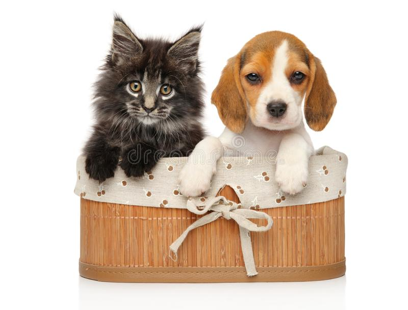 Gatito y perrito junto en un fondo blanco fotos de archivo