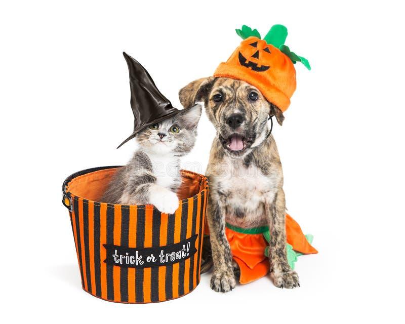 Gatito y perrito lindos de Halloween imagen de archivo