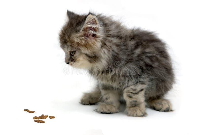 Gatito y su alimento foto de archivo