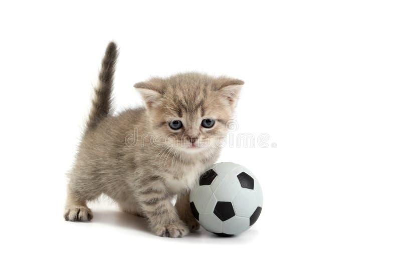 Gatito y un balompié imagen de archivo libre de regalías