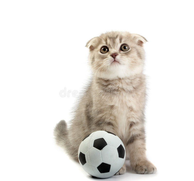 Gatito y un balompié imagenes de archivo