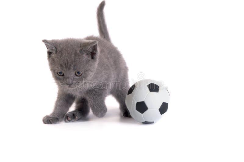 Gatito y un balompié en un fondo blanco fotos de archivo libres de regalías