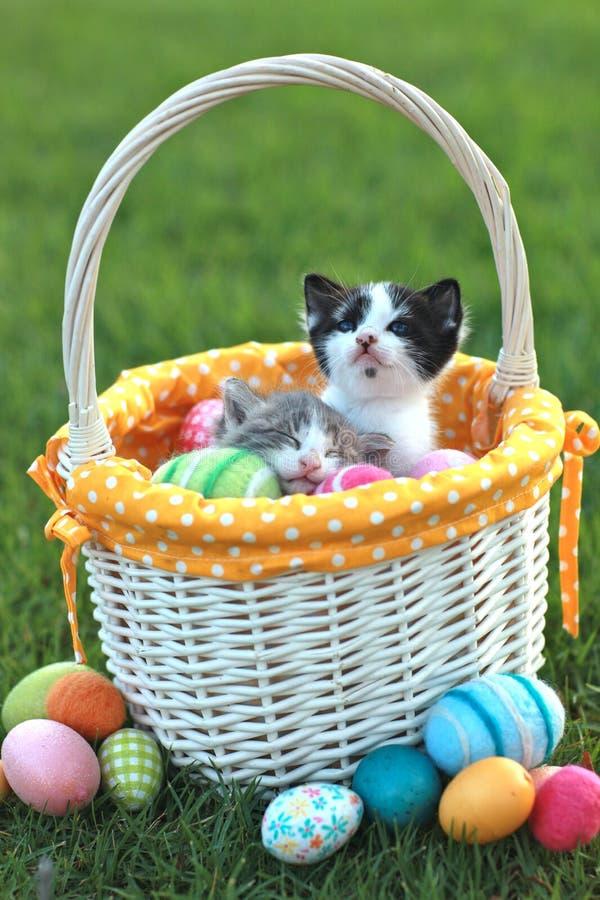 Gatitos adorables en una cesta de Pascua del día de fiesta imagenes de archivo