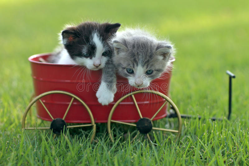 Gatitos al aire libre en luz natural fotografía de archivo