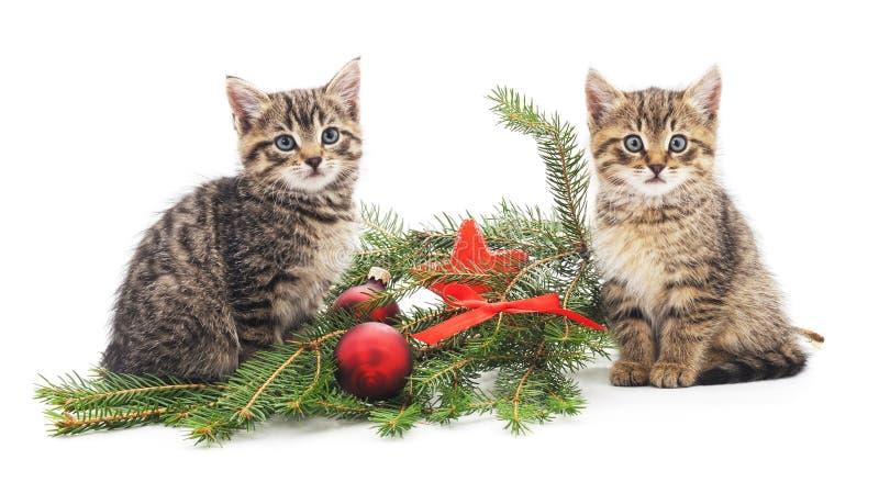 Gatitos cerca del árbol de navidad imágenes de archivo libres de regalías