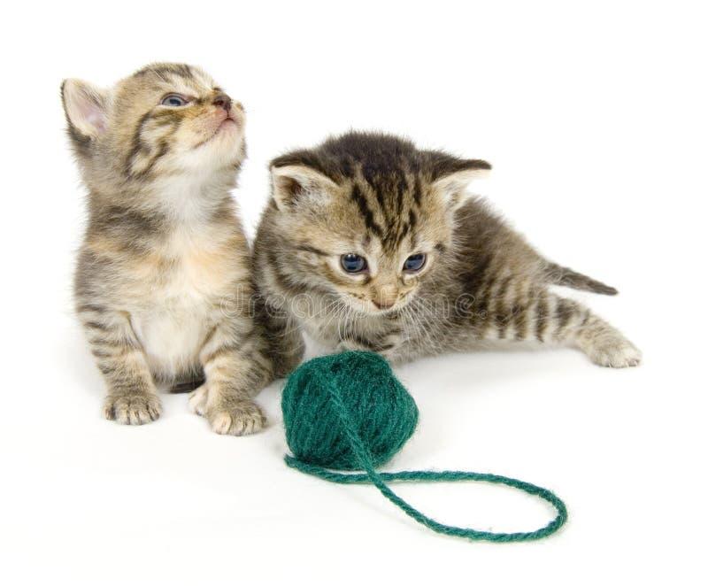 Gatitos con la bola del hilado en el fondo blanco fotos de archivo